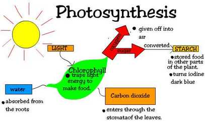 photosythesis take place